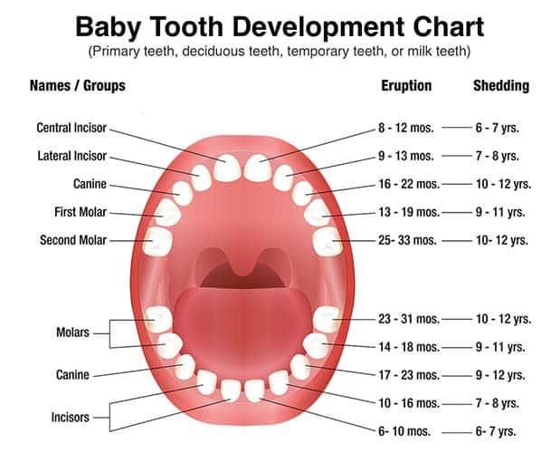 Grafic dinti de lapte